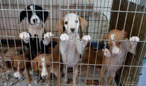 mascotas-refugio