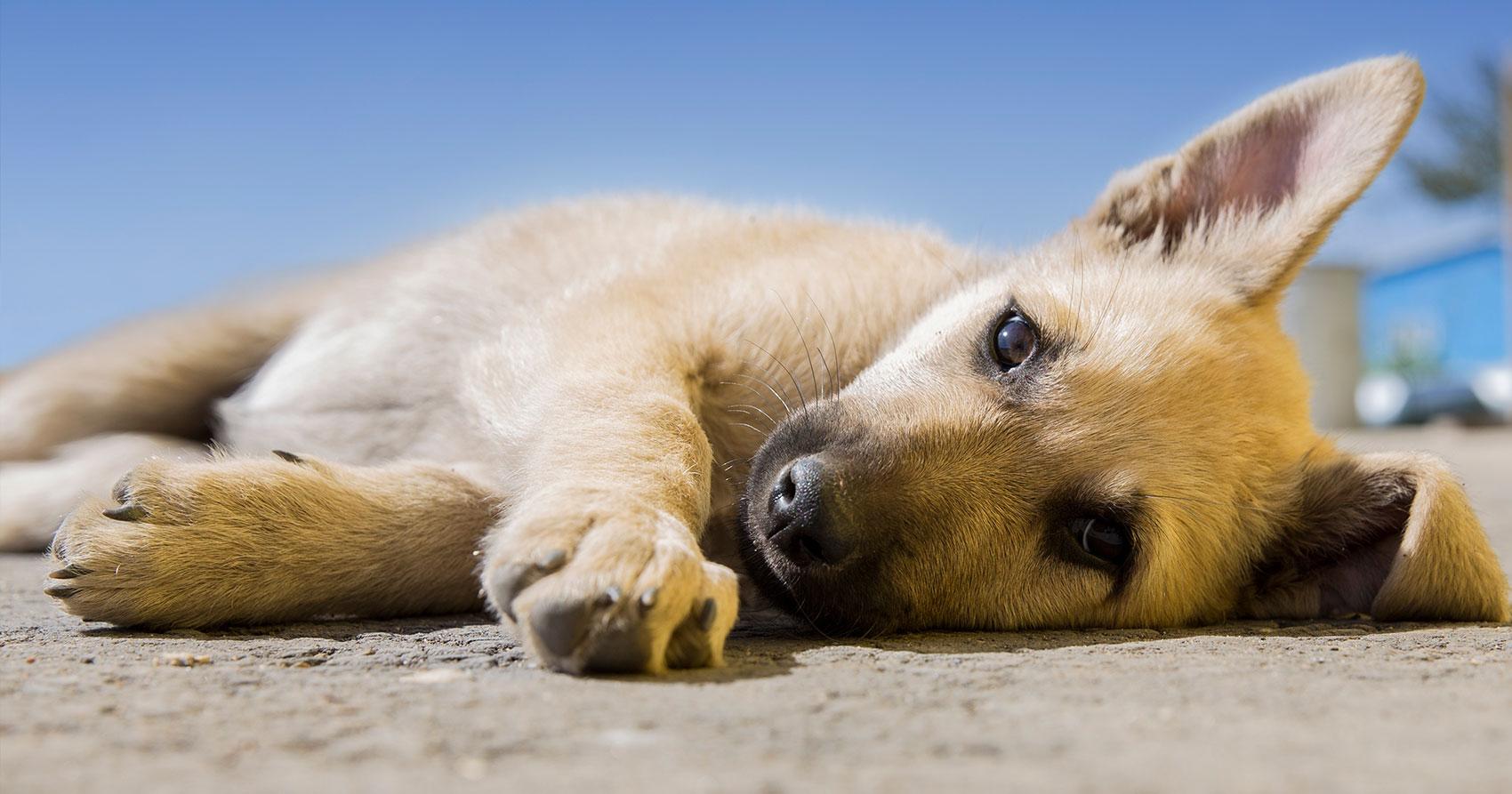 ¿Por qué esterilizar mis mascotas?