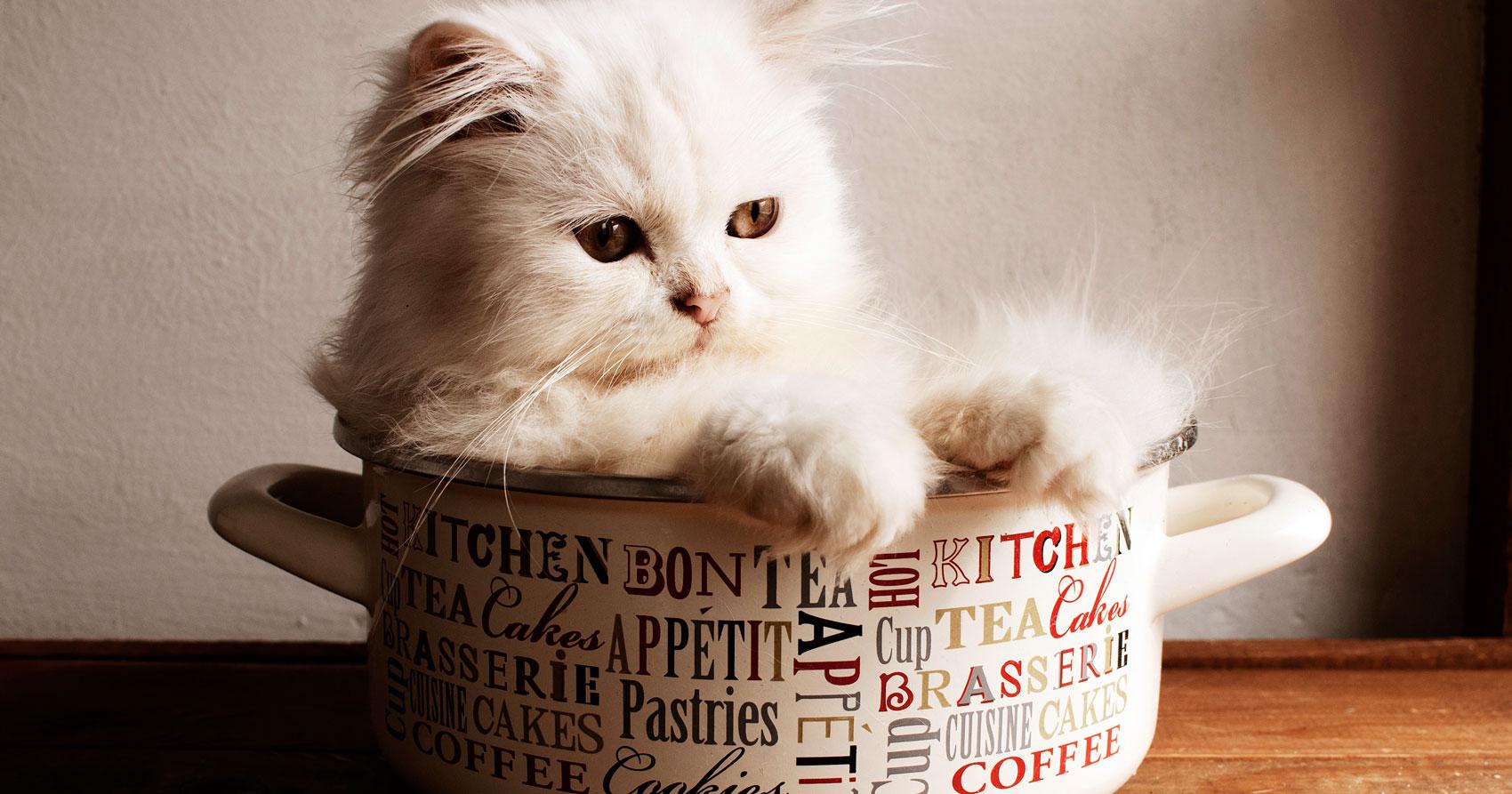 Los gatos son inteligentes y pueden aprender