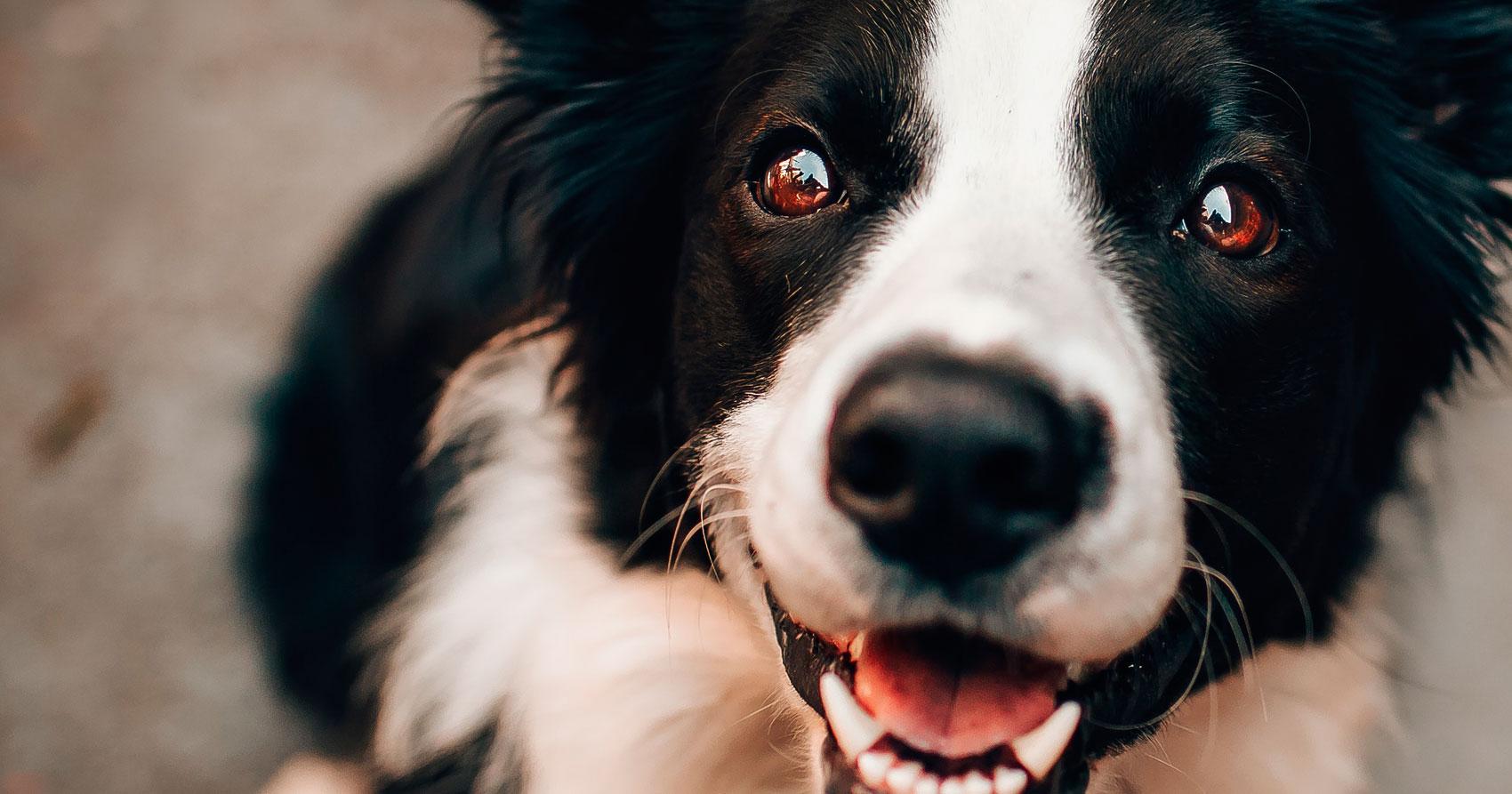 7 Mitos sobre los perros que deberías conocer