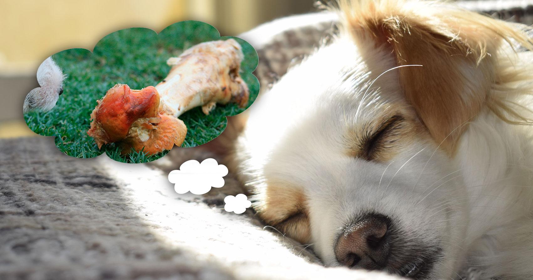 ¿Los perros sueñan? ¿Y con que sueñan?