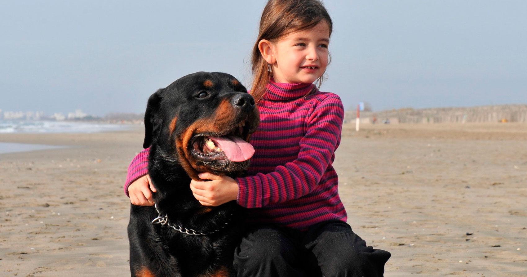 Ventajas y desventajas de los perros de raza grande