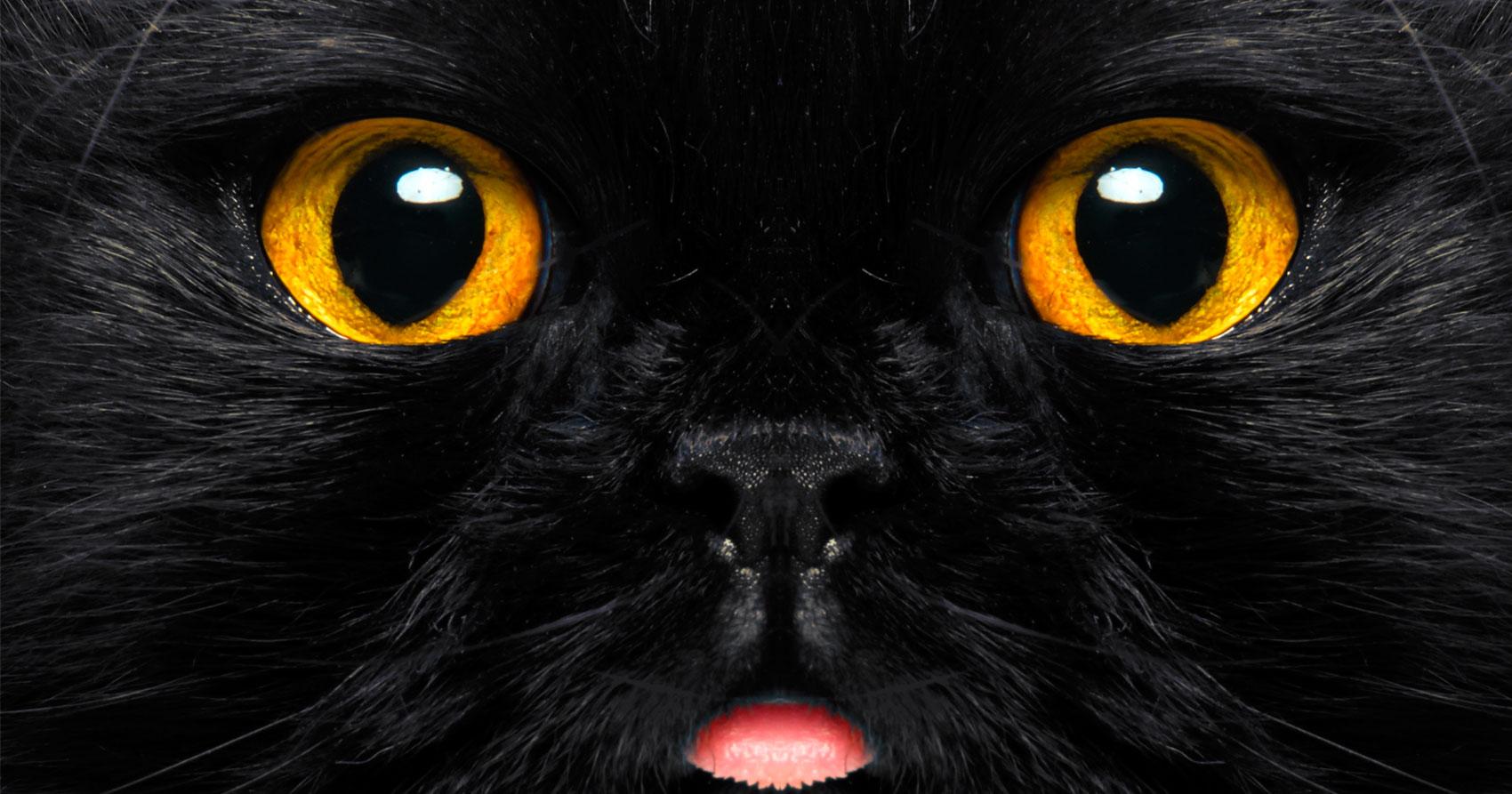 El gato negro y sus mitos
